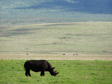 The black Rhino at Ngorongoro crater