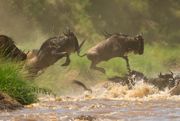 love zanzibar wildebeest migration