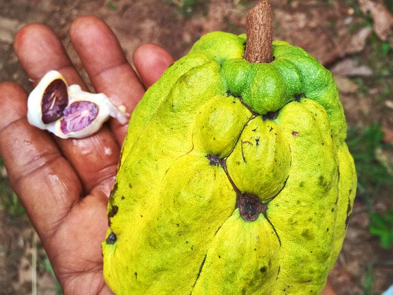 Kako på kryddtur på cykel Zanzibar
