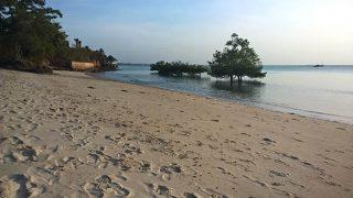 Västkusten av Zanzibar med mangroveträd på stränderna