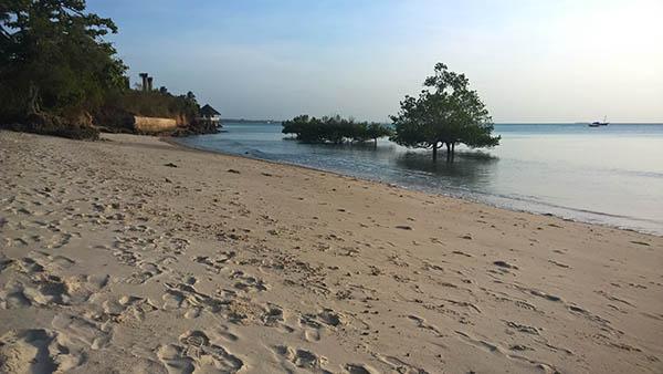 West Coast Zanzibar Mangrove