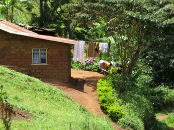 House in the Usambara