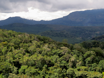View over the Magamba Rainforest