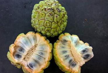 Zanzibar-fruit-testing-stafeli