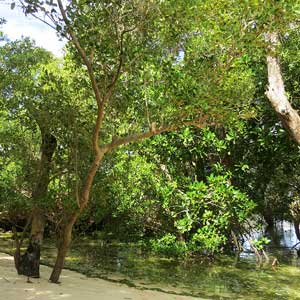 lovezanzibar-your-own-beach-mangrove