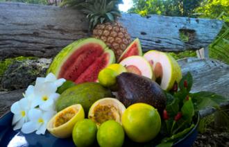 zanzibar-fruit-testing