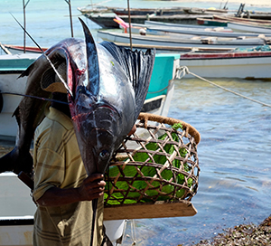 Man carryiing a fish on his head after deep sea fishing in Kizimkazi Zanzibar