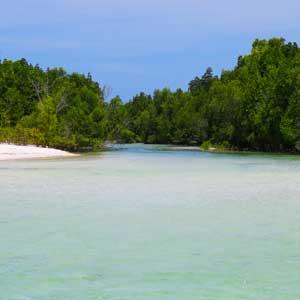 Michamvi-Mangrove-Zanzibar