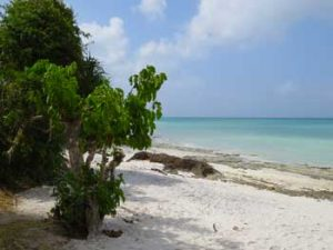 The beach at Pemba Gecko Nature Lodge