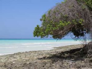 Beach at an island near Pemba