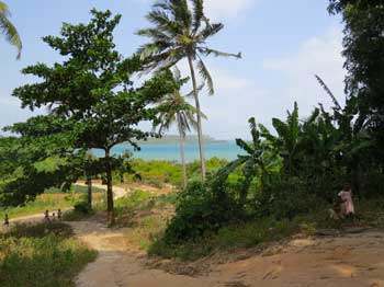 Pemba- sea, palm trees and green