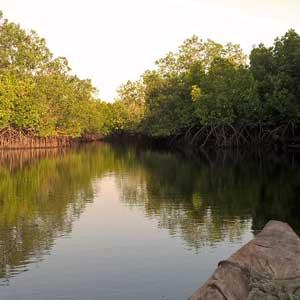 Inne i mangroveskogen på Zanzibar