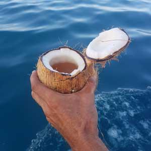 dhow-sail-zanzibar-coconut